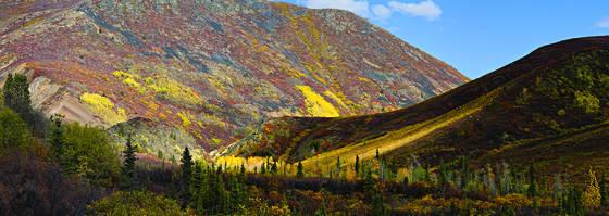 Tundra tree line