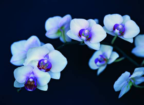 Orchids on parade