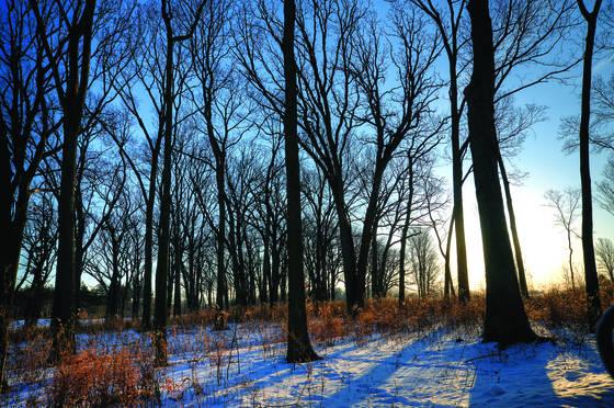 Winter morn 1