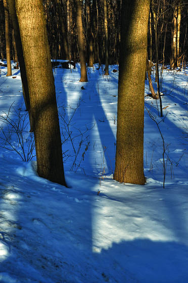 Winter morn 3