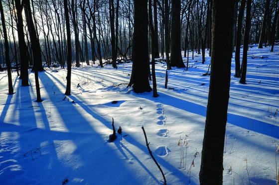 Winter morn 4