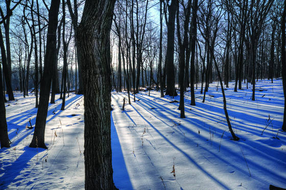 Winter morn 5