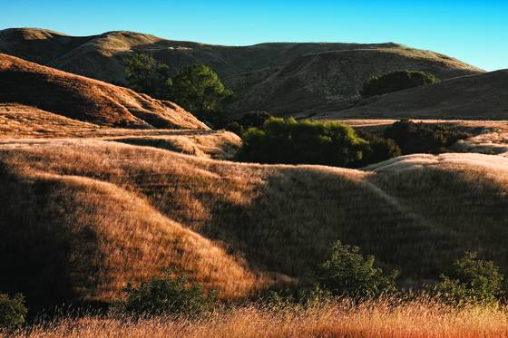 Summer pasture  1