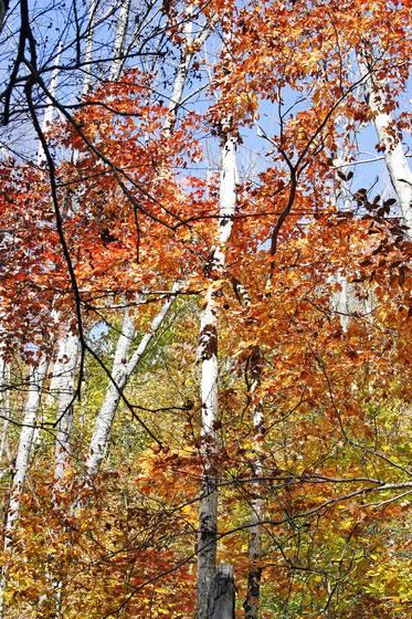 An autumn journey 03