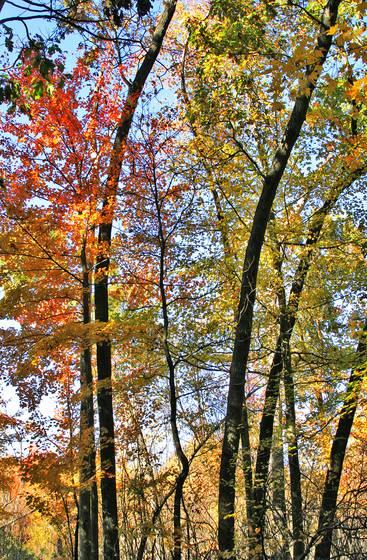 An autumn journey 05