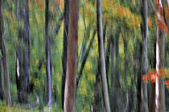 Autumn rhythm 3