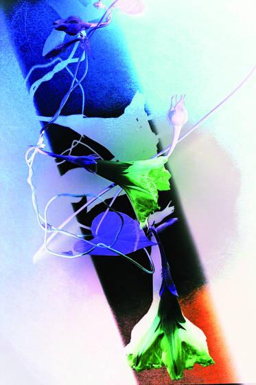Bell flower 1