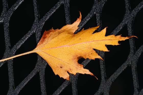 Leaf on grate