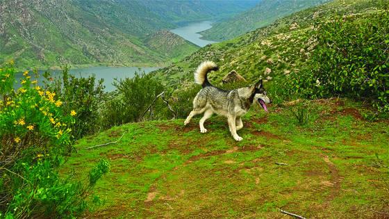 True wolf 4