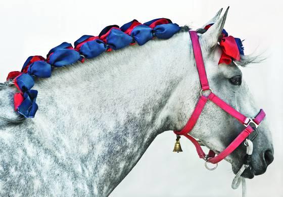 Beribboned horse