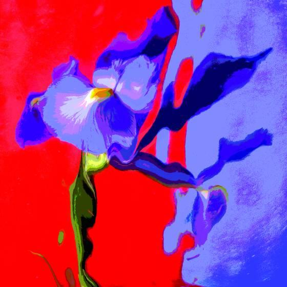 Floral fantasy 5