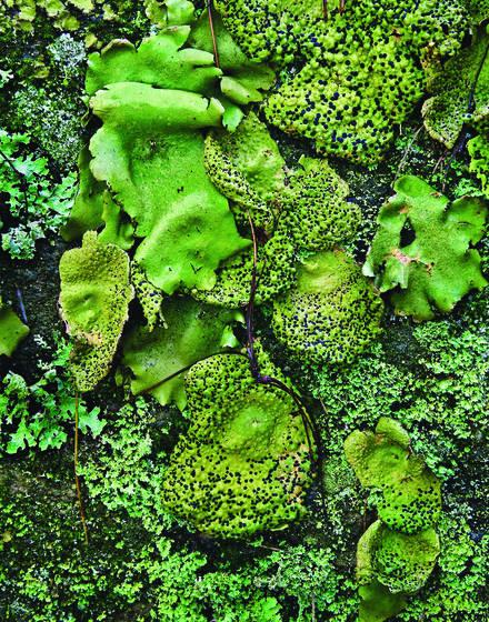 Lichens detail