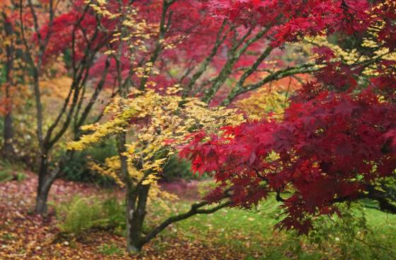 Autumn bokeh 2