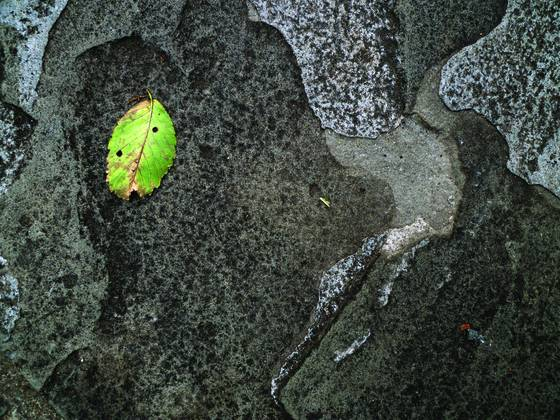 Leaf on moonscape