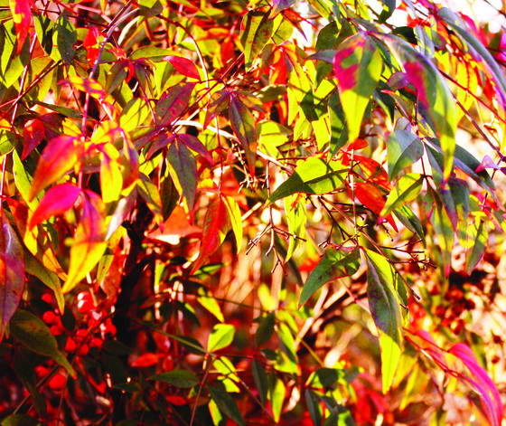 Autumn palette