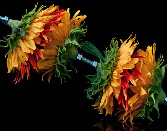 Flower bolt
