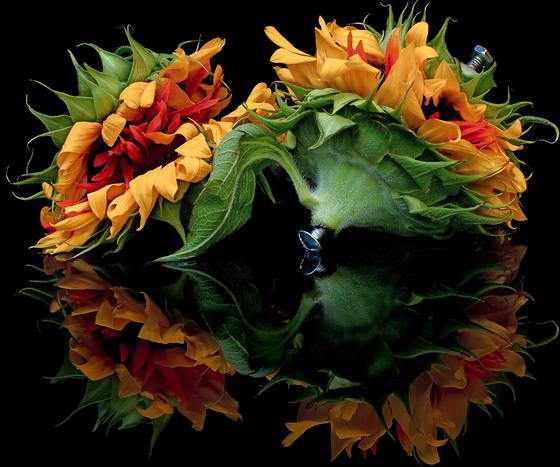 Flower galactica