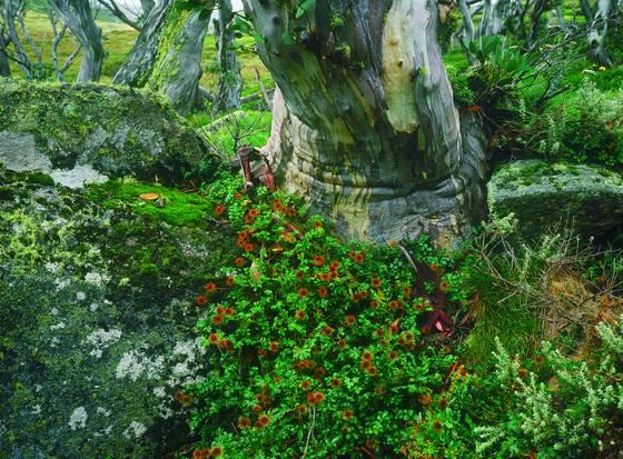 Storm trees 1