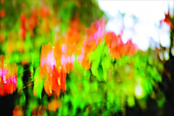 Colors of my garden 10