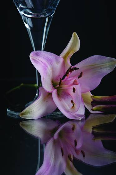 Lily with glass