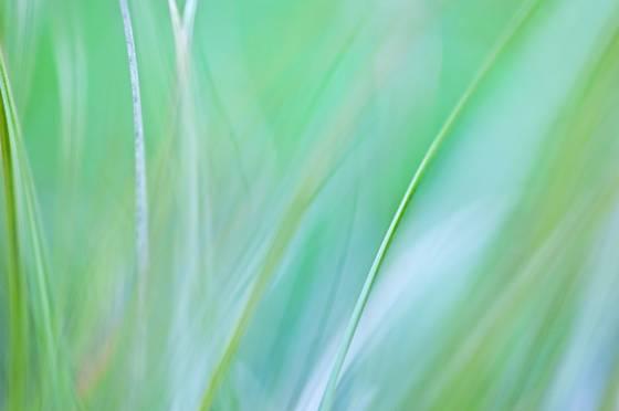 Lexicon of a grass 7