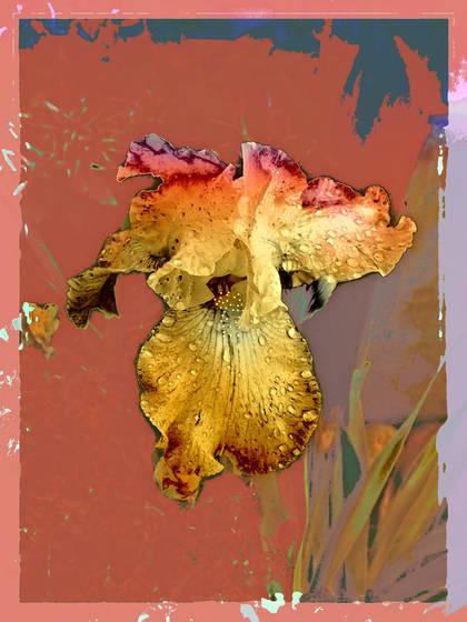 Iris painted