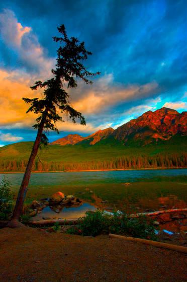 Treeand lake