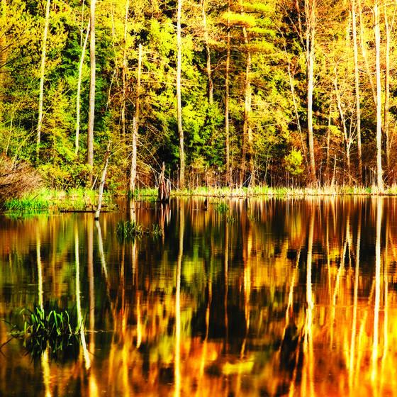 Golden reflection