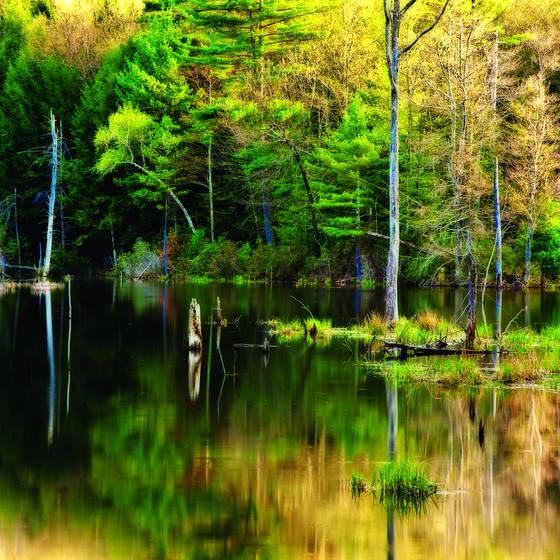 Shoreline reflection