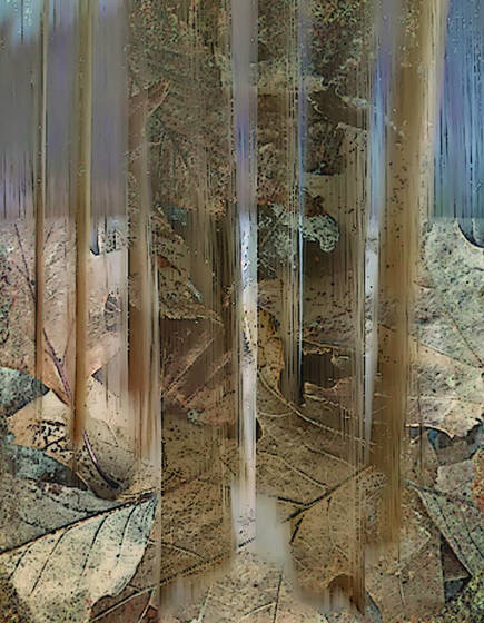 Exposure fusion   trees leaves