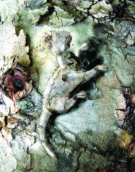Barkameleon in its element
