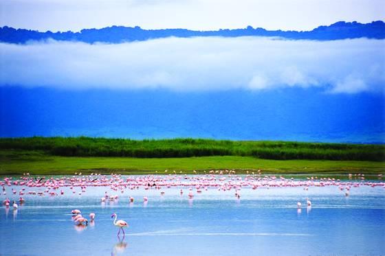 Colors of ngorongoro