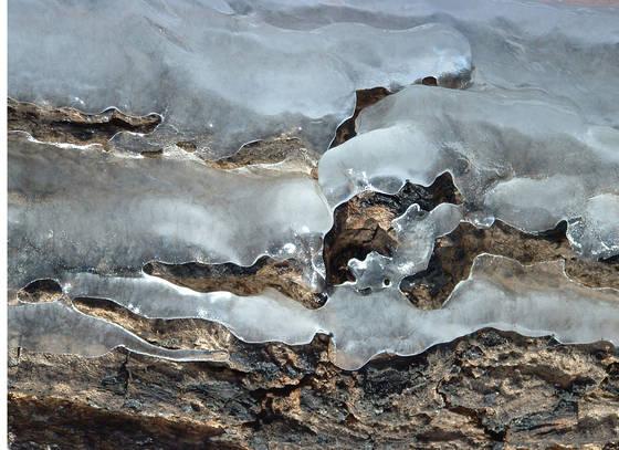 Ice bark i