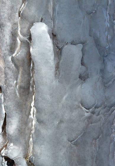 Ice bark iv