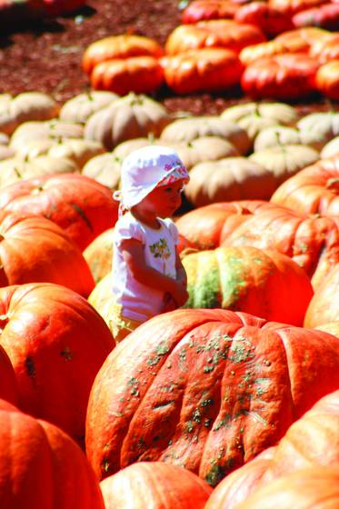 Girl among pumpkins