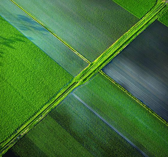 Albany fields