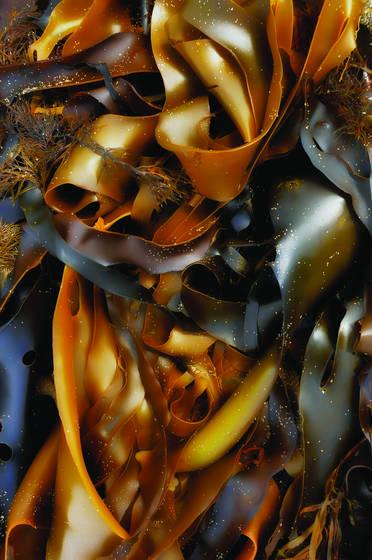 Kelp 5