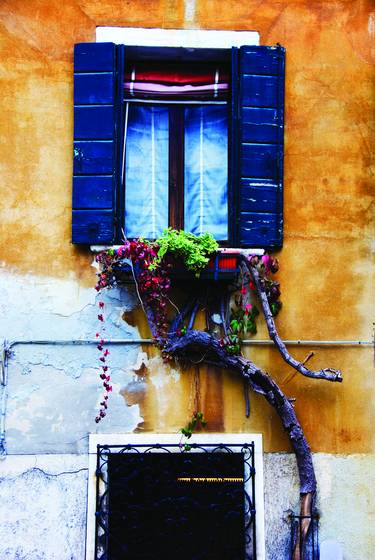 Blue shutters and old vine