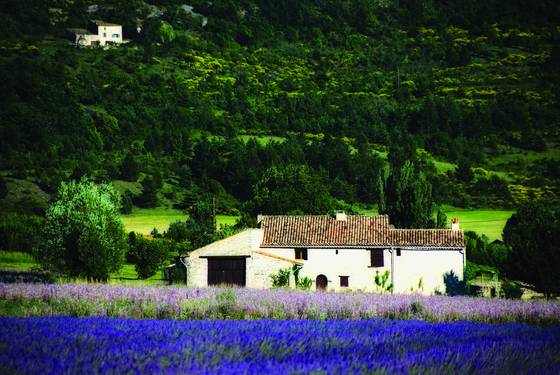 Farmhouse and lavendar