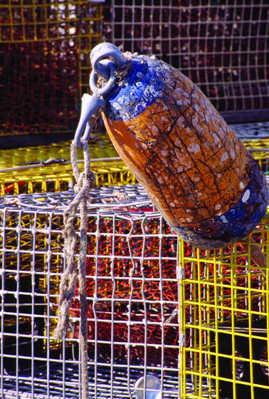 Buoy and traps