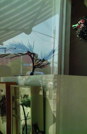 Bird tree