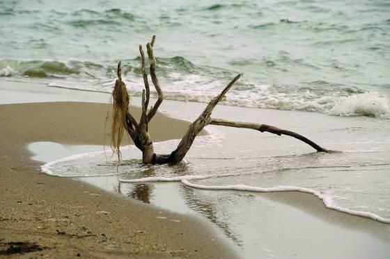 Lady driftwood