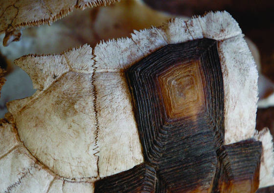 Old tortise shell