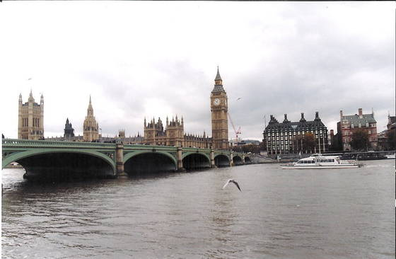Seagull with big ben