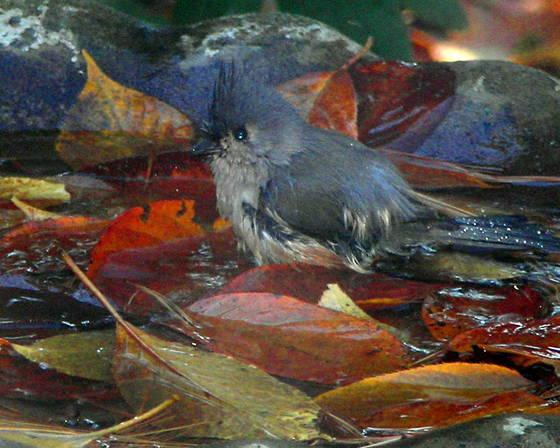 Blue bird bath