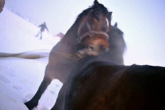 Horse market  1