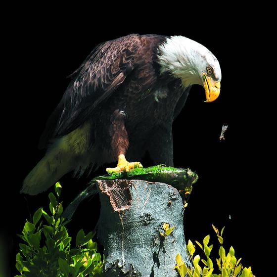 Eagles picnic