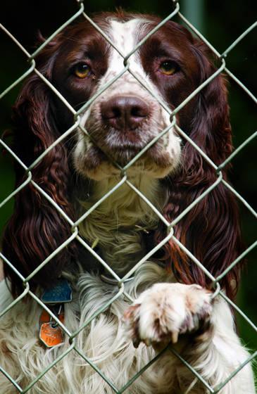 Freddie behind the fence