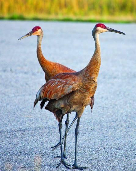 Cranes on road