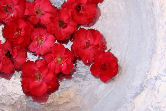 Roses in sliver bowl